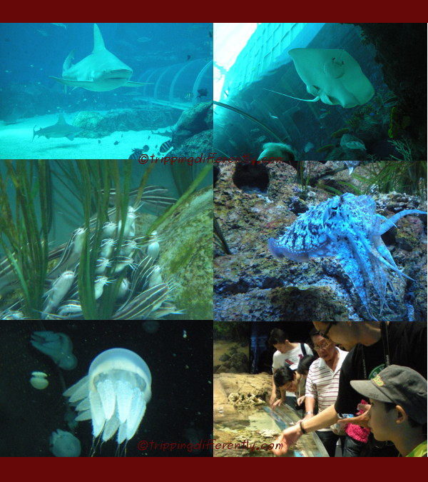Some of the many sea creatures we saw. The last picture shows Walter and Tobias at the touch pool.