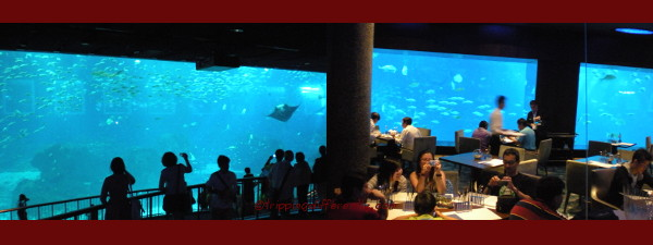 Left: The largest tank/window in the world. It was amazing to just sit there and watch. Right: At the celebrity restaurant, The Ocean Restaurant by Cat Cora.