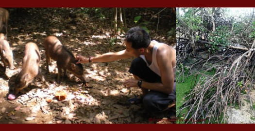 Here's Walter trying to pet some of the wild boars and my favourite - the mangroves. i'm fascinated by how they grow and root themselves and the creatures which live around them.