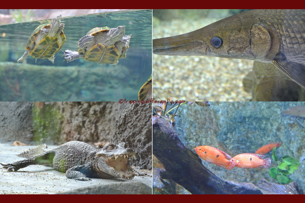 Some of the river creatures we saw.
