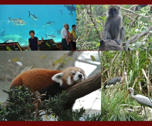 Top Left: Meekong River showcasing huge catfishes and kaps. Top Right: monkeys are actually quite at home near water. Bottom Left: The Red Panda. Bottom Right: a pair of Cranes.
