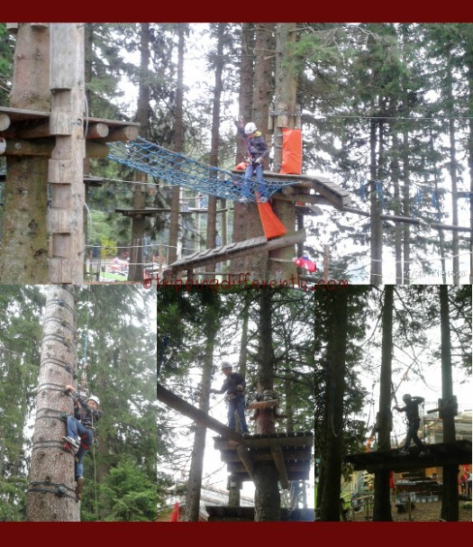 Top: You can see other courses behind him. Bottom Left: Climbing the monkey ladder. Bottom Center: Crossing the shaky log. Bottom Right: Swinging ropes.