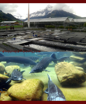 Top: It is in a wonderfully pretty location. Bottom: giant fishes!
