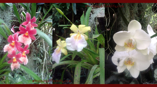 They had lovely orchids too!