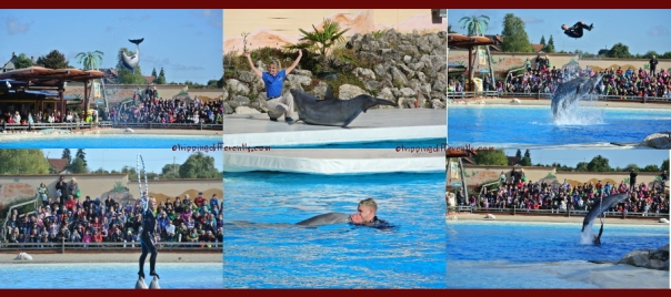 The amazing dolphins and their trainers!