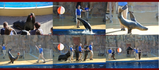 The very funny sea-lions and their sporting trainers.