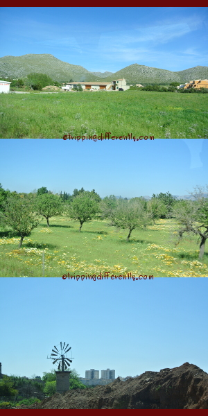The plains set off the mountains so nicely... the orchards are lovely - i wondered what type of fruit trees those were... i wish i had gotten a picture of a complete windmill, painted in white and blue, but there were very few complete ones...