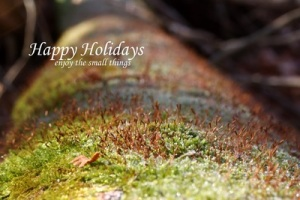 holiday_card_enjoythesmallthings