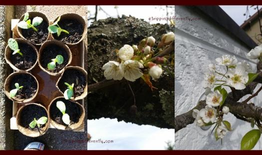 gardenprogress20170609a