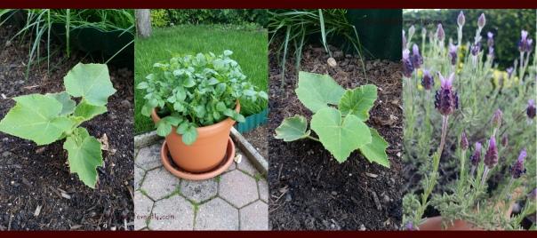 gardenprogress20170609d