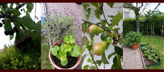 gardenprogress20170609e